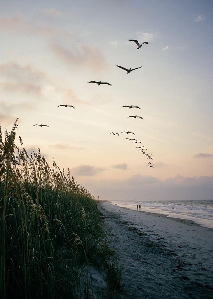 Seabirds in flight