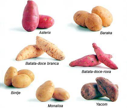 tipos-de-batatas