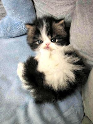"""""""A kitten provides a child with a sleepover friend for life."""" --Jo Kittenger"""