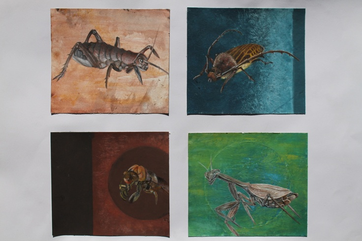 Logan Moffat, 15. New Zealand insects.