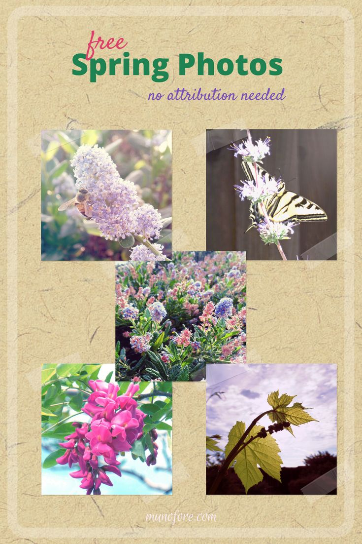 Free Spring Nature Photos. No attribution needed stock images: flower photos. bee photos, butterfly photos, grape leaf photo. Movavi Photo Editor Review