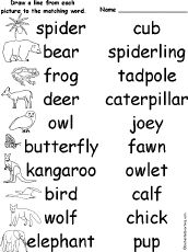Names for males, females, babies and groups of different animals