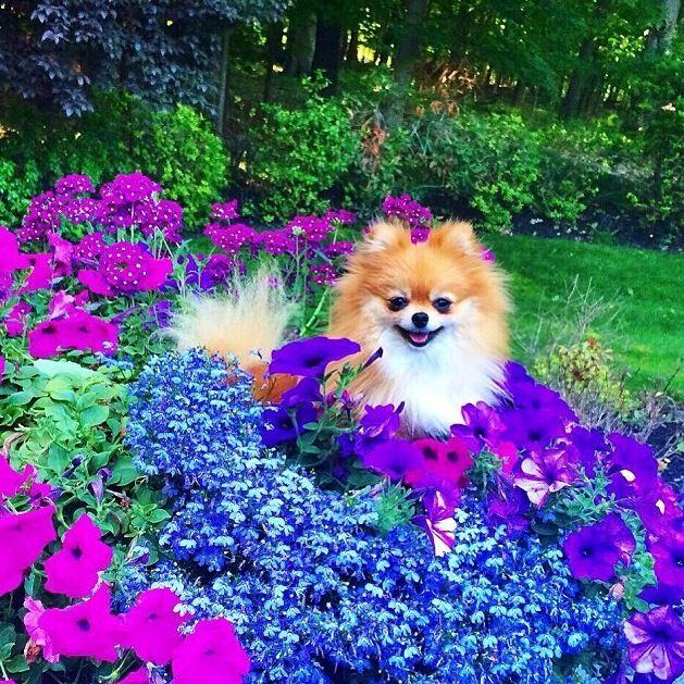 ginger-purple-flowers