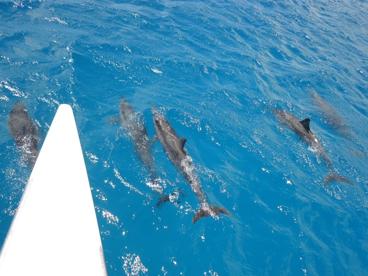dolphins in Oahu