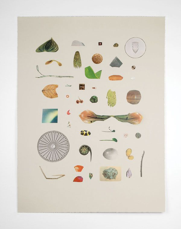 Maggie Groat, Lights, Twigs, Minerals, Fungi, Seedlings, Items of Remarkable Colour and Other Organic Matter, 2012