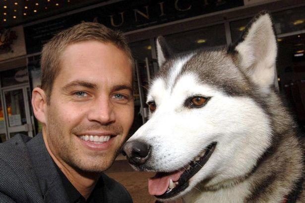 Man's best friend: Paul Walker with Huskie dog Tinker to publicise Eight Below