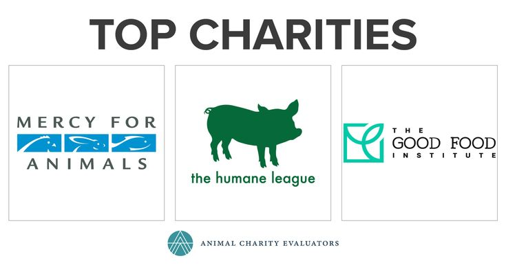 Animal Charity Evaluators updated charity recommendations