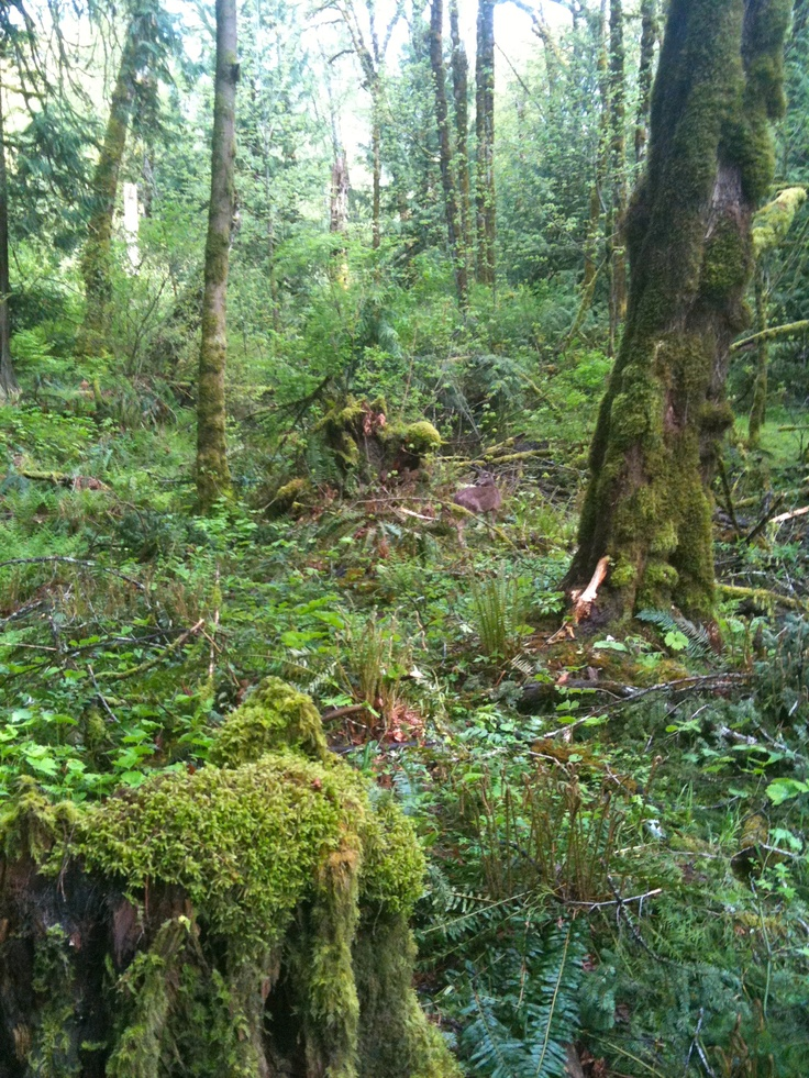 Goldstream Park, Vancouver Island BC Canada.                                                   5 minutes from our vacation home.