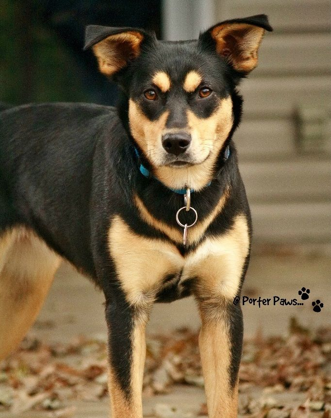 Elli is an adoptable mixed breed searching for a forever family near London, ON. Use Petfinder to find adoptable pets in your area.