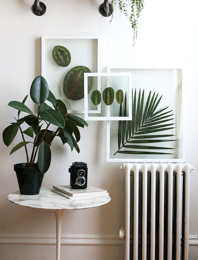 pressed leaves in glass frames, radiator, plant, and camera