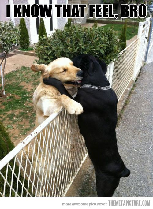 Dogs understand each other…