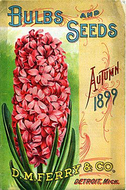Bulbs and Seeds D.M. Ferry & Co. Autumn 1899 - Seedsmen - Detroit, Michigan - pink hyacinth