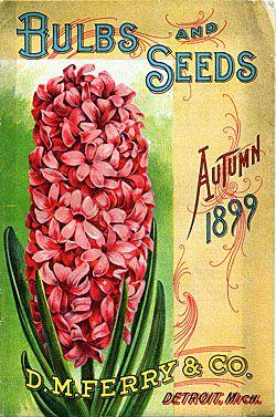 Bulbs and Seeds D.M. Ferry & Co. Autumn 1899 - Seedsmen - Detroit, Michigan - pink hyacinth