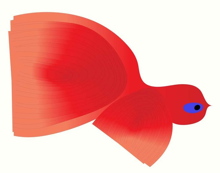 Peter Bainbridge 'Japanese Fighting Fish' - archival pigment print on handmade French cotton paper