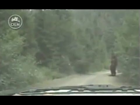 Mysterious Encounters: MOUNT St. HELENS (REAL BIGFOOT DOCUMENTARY)