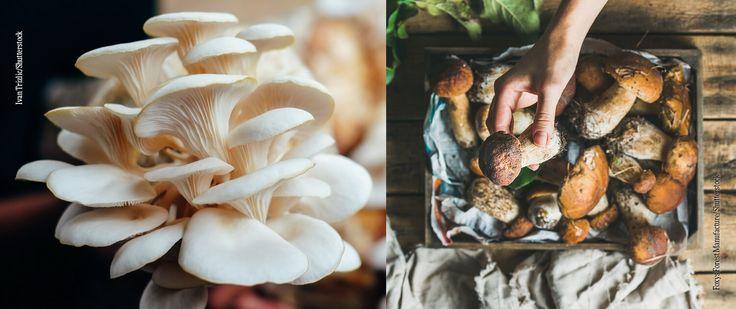 8 Pilzarten: Wir verraten euch wo ihr sie findet, wie sie schmecken und was ihr am Besten daraus zubereitet. Querkochen