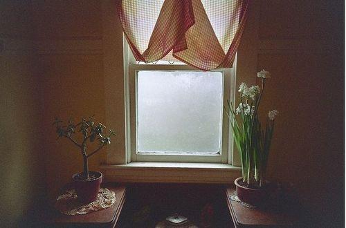 : Curtains, Window, Trav'Lin Lights, Plants
