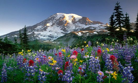 Mount Rainier when the flowers are blooming!