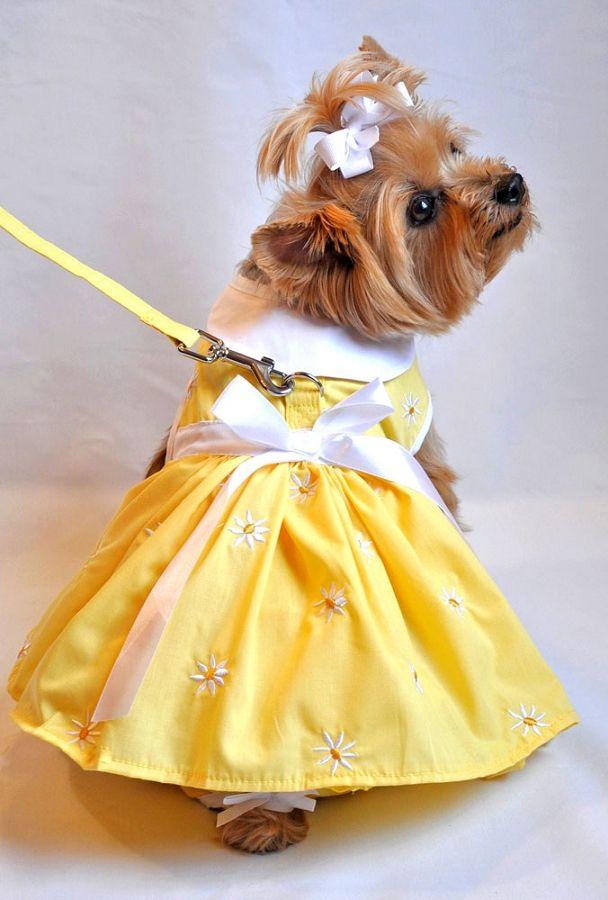 Daisy Bow Dog Dress- Blue at GlamourMutt