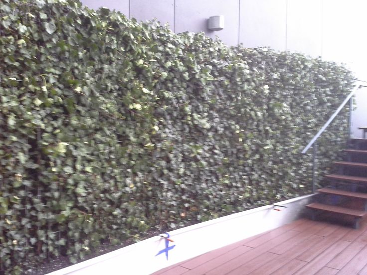 Panel bluszczu - żywa zielona ściana