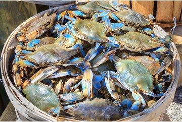 Bushel of Blue Crabs -         Repinned by Chesapeake College Adult Ed. We offer free classes on the Eastern Shore of MD to help you earn your GED - H.S. Diploma or Learn English (ESL) .   For GED classes contact Danielle Thomas 410-829-6043 dthomas@chesapeke.edu  For ESL classes contact Karen Luceti - 410-443-1163  Kluceti@chesapeake.edu .  www.chesapeake.edu