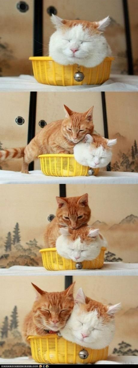 kitties in a basketOrange Cat, Kitty Cat, Best Friends, Fat Cat, I Love Cat, Baskets, Silly Cat, Animal, White Cat