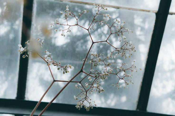 Botanic Poetry | LAR - Laurie-Anne Roux Photographe