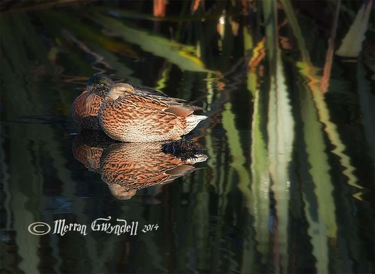 Ducks at Western Springs by Merran G on 500px #photography #ducks