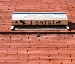 Say Goodbye to Pesky Bugs: Build a Bat House