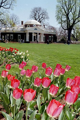 Monticello in Spring   Jefferson's home.  It's beautiful and intrigues you. So many inventions - genious!