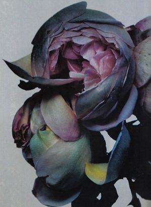 Peonies, NICK KNIGHT, FLORA
