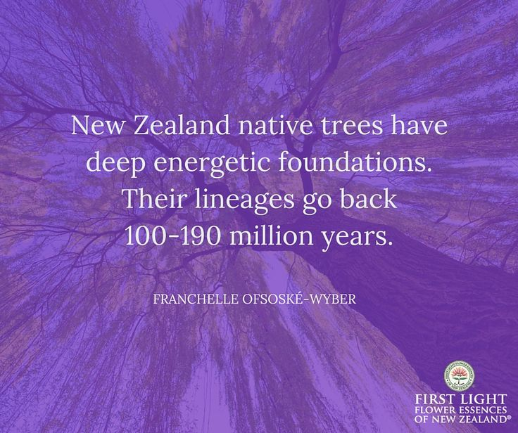 New Zealand native trees have deep energetic foundations.