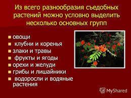 съедобные растения в лесу с картинками