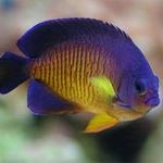 Marine-Fish-Saltwater-Fish-Store-Buy-Saltwater-Fish-Baton-Rouge