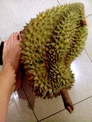 Durian, the famous prickly (and super smelly!!) fruit, proud of South East Asia