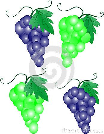Vector illustration of a bunch of grapes. White and red grapes, drawn 3D effect.