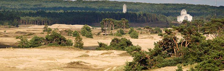 Stichting Wisent op de Veluwe zorgt in samenwerking met Staatsbosbeheer en ARK Natuurontwikkeling voor de komst van deze Europese bizon.