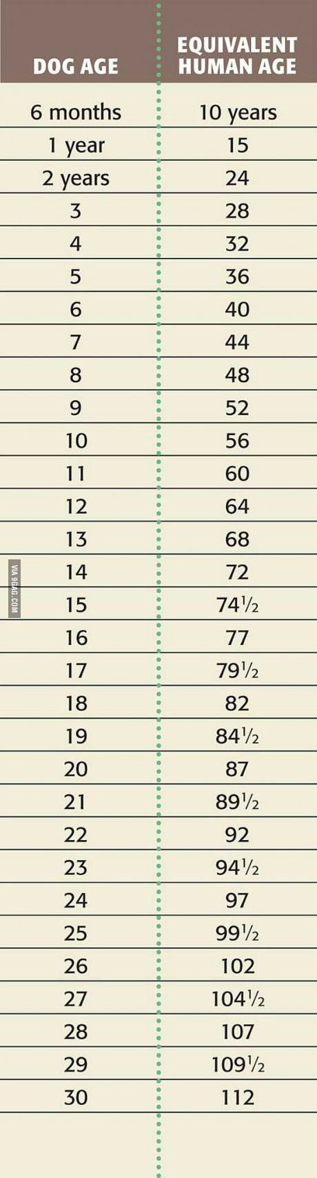 How old is your dog?