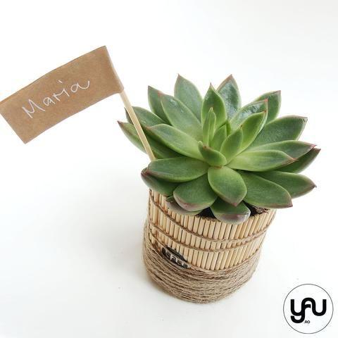 MARTURII plante suculente in suport din lemn si sfoara - M3 - https://www.yau.ro/collections/marturii-nunta-si-botez?page=1 - yauconcept - elenatoader