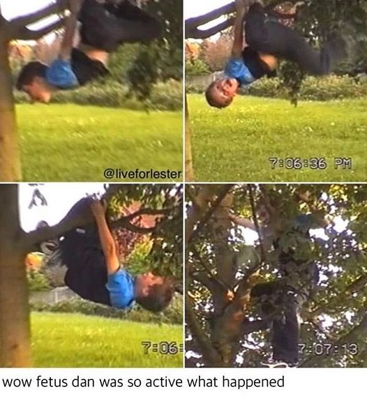 He probably fell out of that tree and that's where it all started