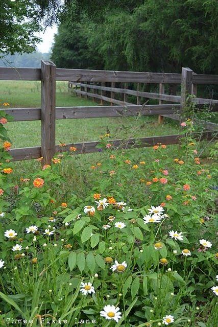 farm fences beg for big, beautiful borders of flowers, like this