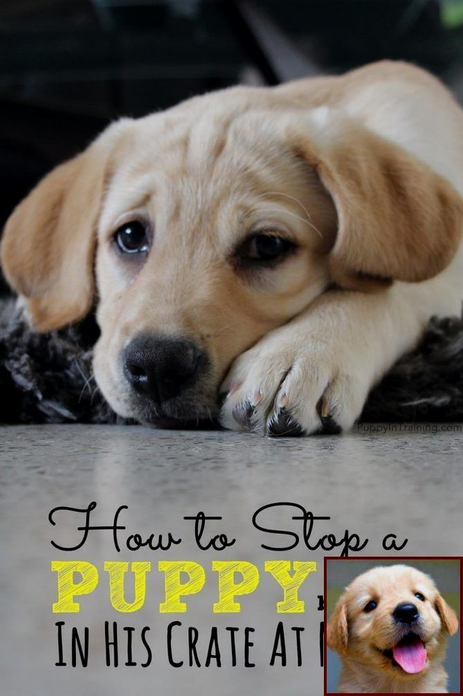 House Training A Puppy How Long Does It Take And What Is Submissive