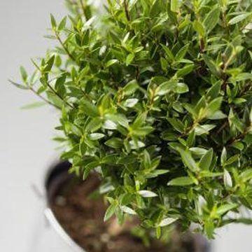 Getting rid of fruit flies on your indoor plants
