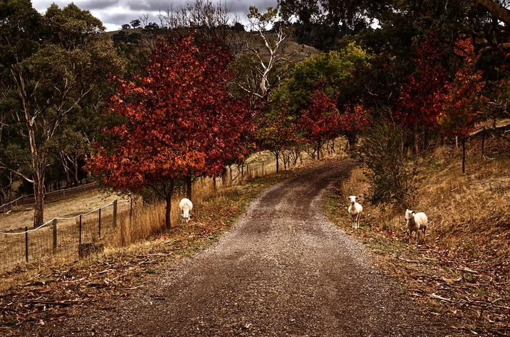 Autumn is here so beautiful. this is near Stirling South Australia