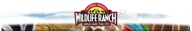 Natural Bridge Wildlife Ranch African Safari Texas Style - Driving Safari with lot's of animals to see, child-friendly petting zoo, and lot's more.  We had a terrific time here. Grummer Tested and Recommended.
