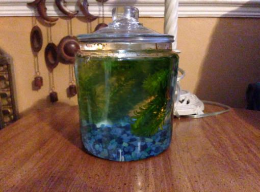 Picture of How to Make a Closed Aquatic Ecosystem