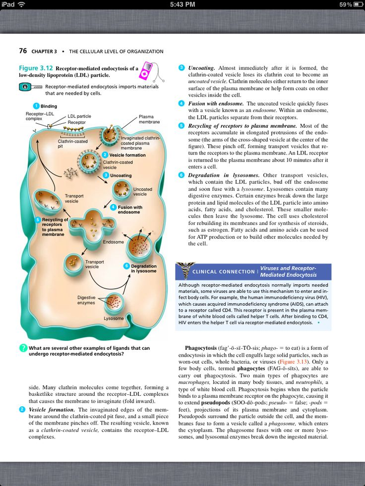 35 best Chapter 2: The Chemical Level of Organization images on ...