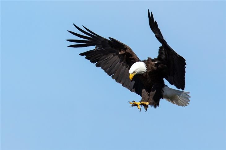 Relative to their size, the wings of an eagle have greater strength and power than an airplane's wings.