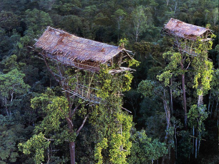 The Korowai people in Papua New Guinea build their houses up to 100 feet above the ground. High above the forest floor, deep in the swampy lowland jungles of Papua, tree houses greet the eyes of explorers trekking into what remains one of the last remote corners of the globe.