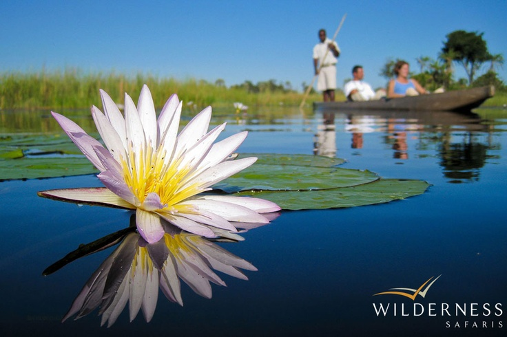 Xigera Camp - The blue of the sky is mirrored in the water, broken only by large round water lily leaves and their stunning purple and white flowers. #Safari #Africa #Botswana #WildernessSafaris